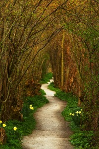 The Winding Path - Leiden, Zuid Holland